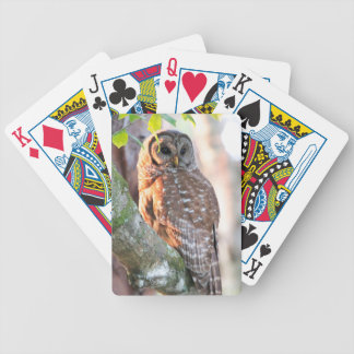 Hibou barré dans l'arbre au coucher du soleil jeu de cartes