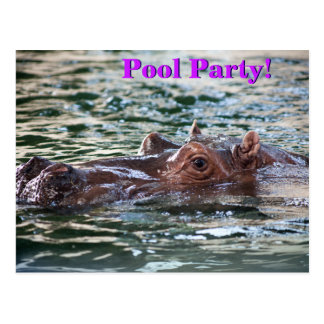 Hippopotame de natation•Réception au bord de la Carte Postale