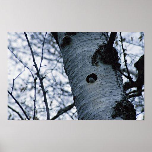 Hirondelle d'arbre affiche
