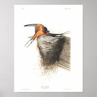 Hirondelle de grange du plat 173 d'Audubon Poster