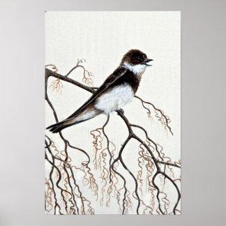 hirondelle Rugueux-à ailes Posters