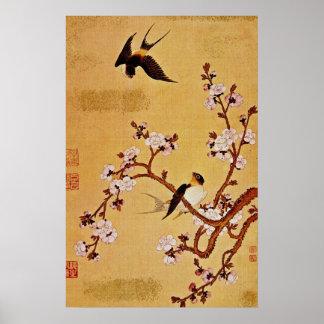 hirondelles de blanc et branches fleurissantes, posters