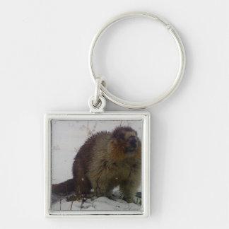Hiver Marmot Porte-clé Carré Argenté