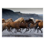 Horde chevaux, Papier poster (mat)