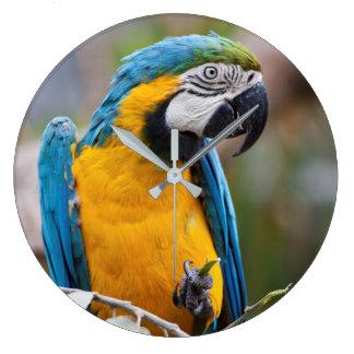 Horloge bleue et jaune d'ara