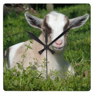 Horloge Carrée Animal de ferme de basse-cour de chèvre de bébé