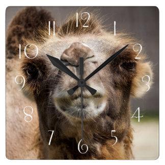 Horloge Carrée Chameau Bactrian