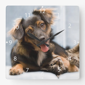 Horloge Carrée Chats et chiens - chien drôle - chats drôles