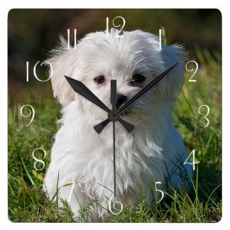 Horloge Carrée Chiot maltais
