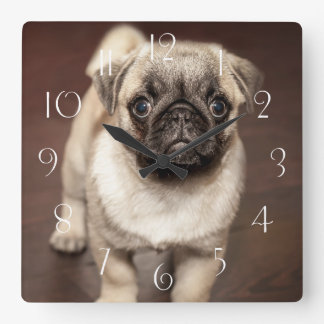 Horloge Carrée Chiot mignon de carlin
