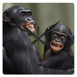 Horloge Carrée Deux bonobos de sourire