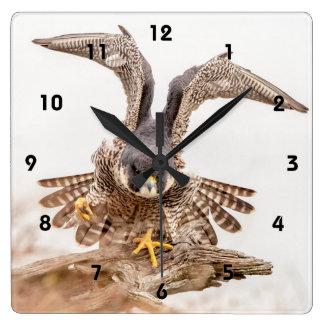 Horloge Carrée Faucon pérégrin