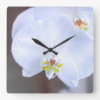 Horloge Carrée gloire de matin