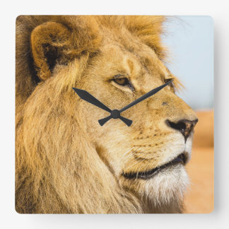Horloge Carrée Grand lion regardant loin