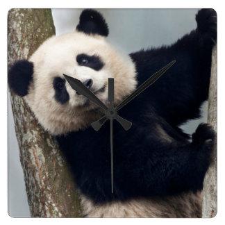 Horloge Carrée Jeune panda grimpant à un arbre, Chine