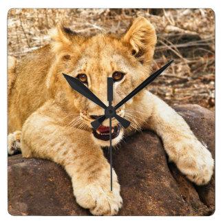 Horloge Carrée Le tigre CUB prend le reniflard sur une roche