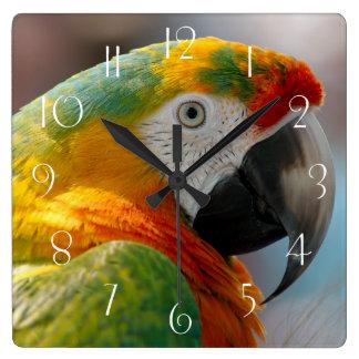 Horloge Carrée Perroquet d'ara