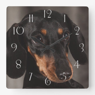 Horloge Carrée Portrait magnifique de teckel