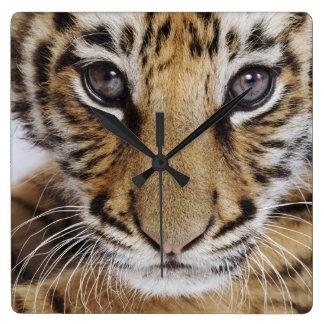 Horloge Carrée Tigre CUB
