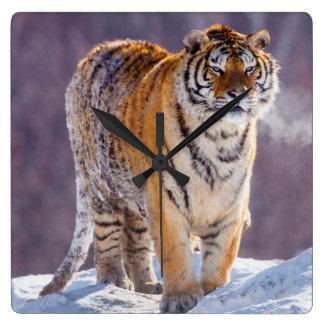 Horloge Carrée Tigre sibérien dans la neige, Chine