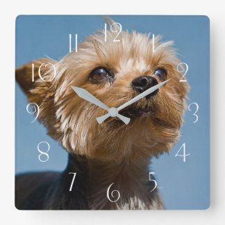 Horloge Carrée Yorkshire Terrier