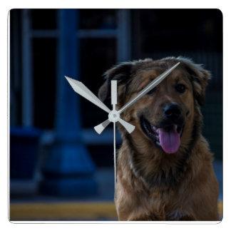 Horloge de chien