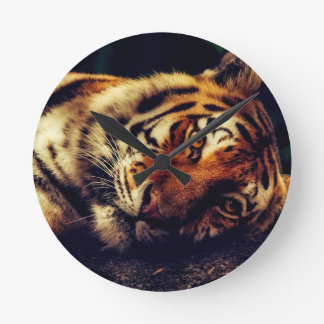 Horloge Ronde Faune animale de tigre reposant le macro plan
