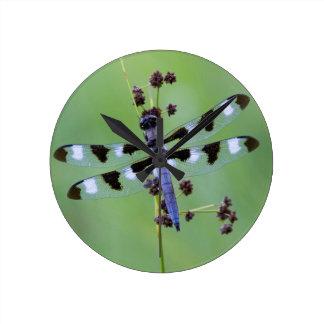 Horloge Ronde Mouche de dragon étée perché sur l'herbe, Canada