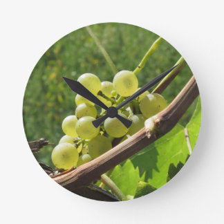 Horloge Ronde Raisins blancs sur la vigne. La Toscane, Italie