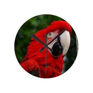 Horloge Ronde Red Macaw