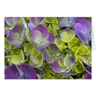 Hortensia de jardin de Keukenhof Carte De Vœux