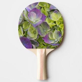 Hortensia de jardin de Keukenhof Raquette De Ping Pong