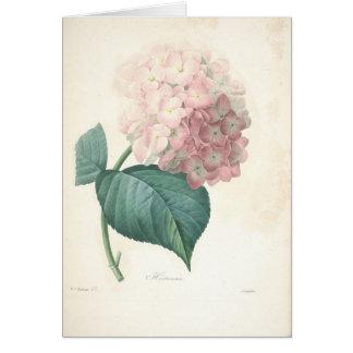 Hortensia par la carte de sympathie botanique de