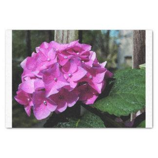Hortensia rose vif papier mousseline