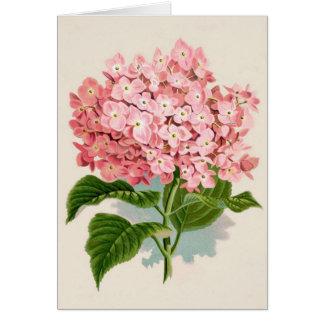 Hortensia rose vintage carte de vœux