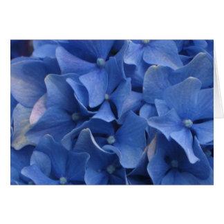 Hortensias bleus carte de vœux