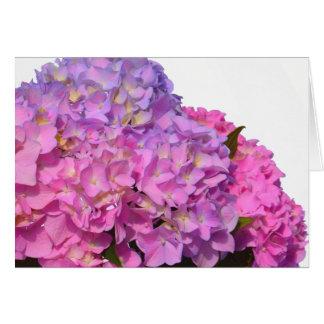 Hortensias roses et bleus carte de vœux