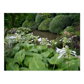 Hosta dans un jardin 2 de zen carte postale