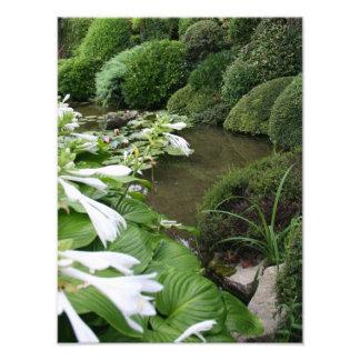 Hosta dans un jardin de zen - copie de photo