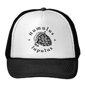Houblon de lupulus de Humulus pour la bière de Casquette