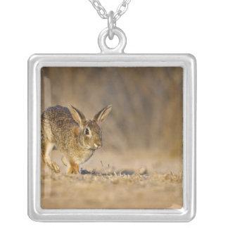 Houblonnage de lapin de lapin oriental pendentif carré
