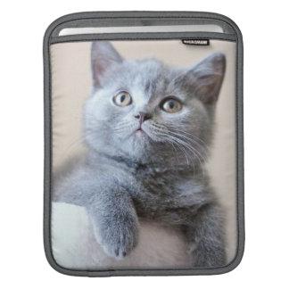 Housse iPad Chat britannique gris de Shorthair
