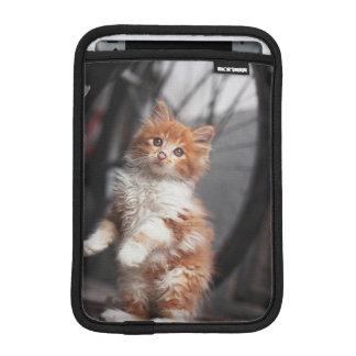 Housse iPad Mini Chaton tigré orange