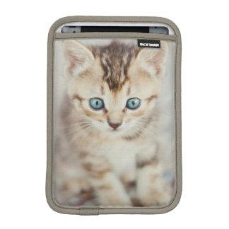 Housse iPad Mini Kitty observé par bleu