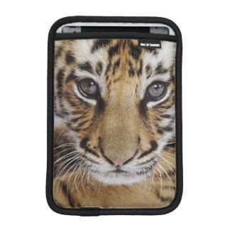 Housse iPad Mini Tigre CUB