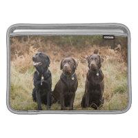 Trois chiens d'arrêt de Labrador noirs