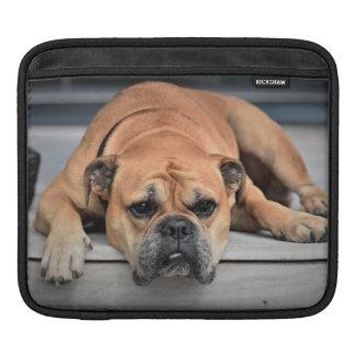 Housse Pour iPad Beau chien de bouledogue de Brown s'étendant sur