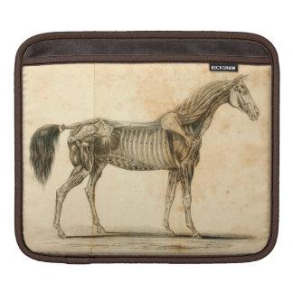 Housse Pour iPad Douille d'iPad d'anatomie de cheval