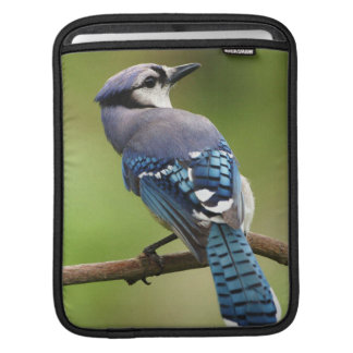 Housse Pour iPad Geai bleu