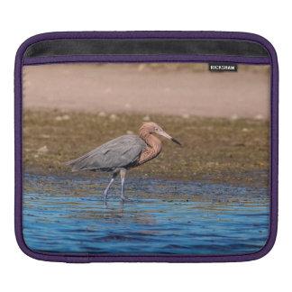 Housse Pour iPad Héron rougeâtre sur la plage du nord